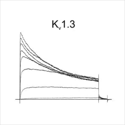 Kv1.3 traces