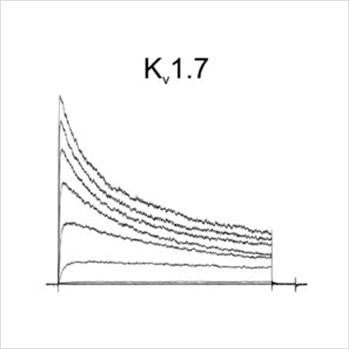 Kv1.7 traces