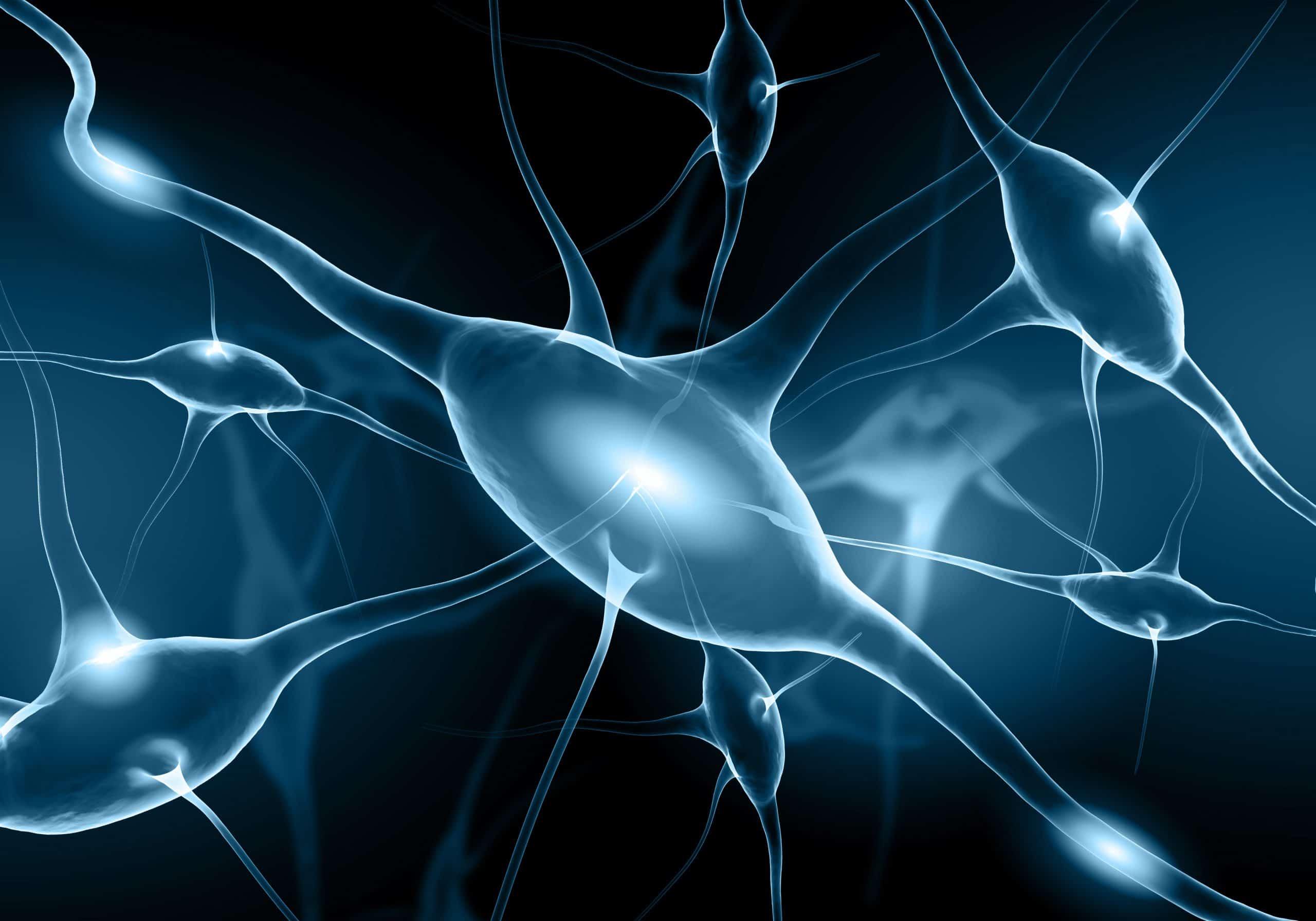 Metrion Biosciences Neuroscience Services scaled