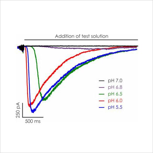 Representative ASIC1a currents pH EC50