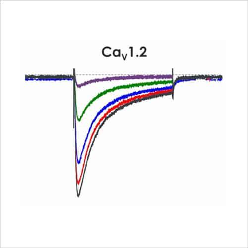 CiPA ion channel panel 2c