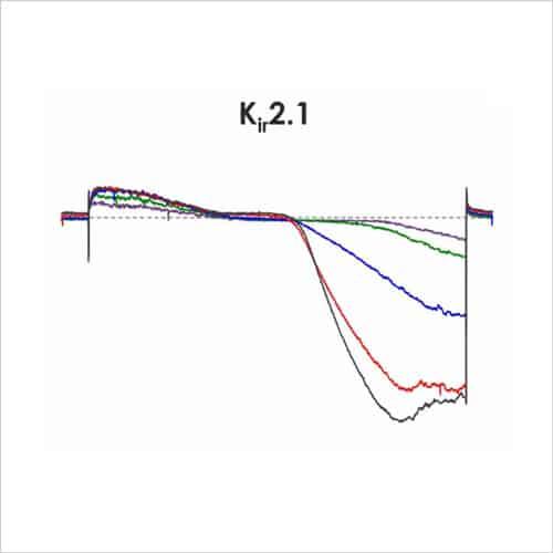 CiPA ion channel panel 2e