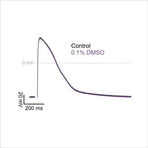 Figure 1a stimulated AP DMSO control