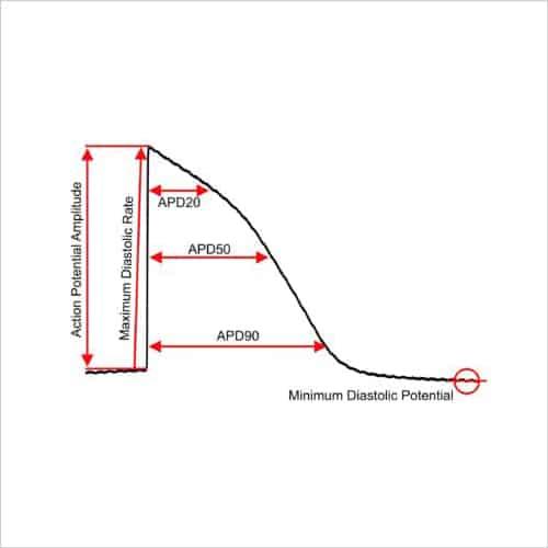 Figure 1c stimulated AP DMSO control