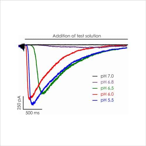 Figure 4a. CNS Ion Channel Targets