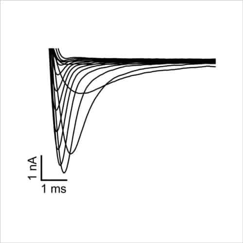 Figure 6. INav