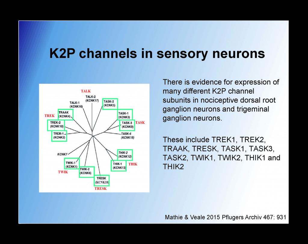 Therapeutic Potential of Activators Slide 30