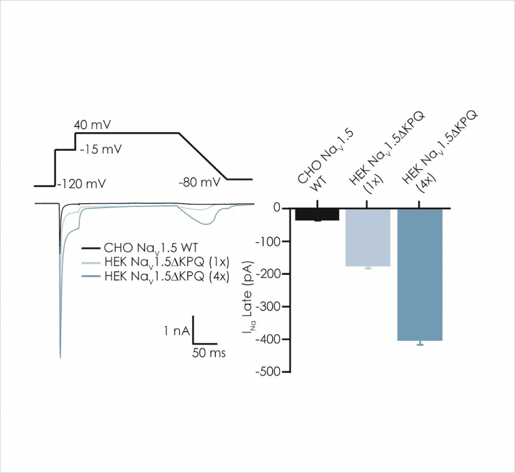 Figure 2 Comparison of peak left and late right Na v 1 5 current components in