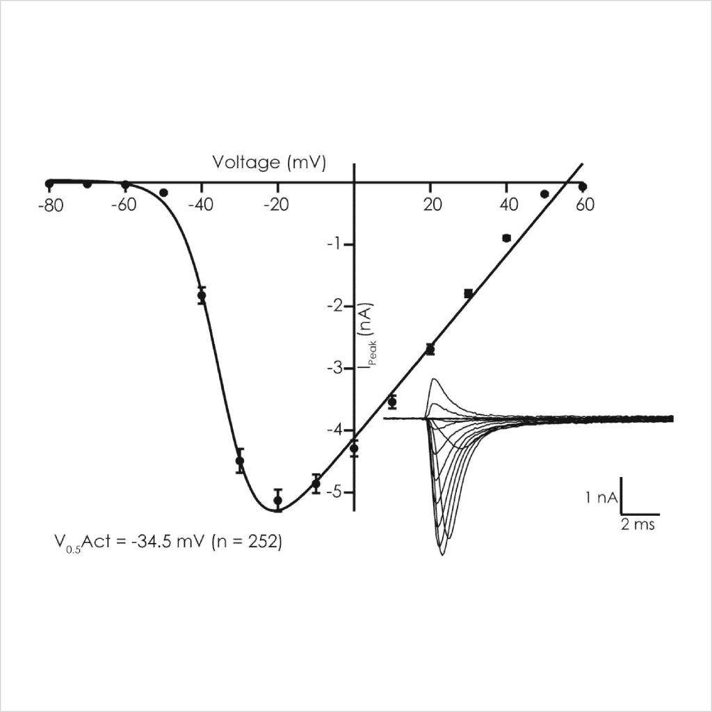Figure 3 Voltage dependent biophysical properties of D KPQ peak Na v 1 5 currents1