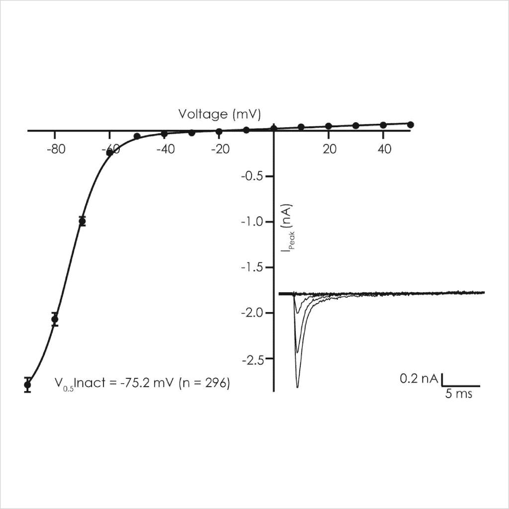 Figure 3 Voltage dependent biophysical properties of D KPQ peak Na v 1 5 currents2