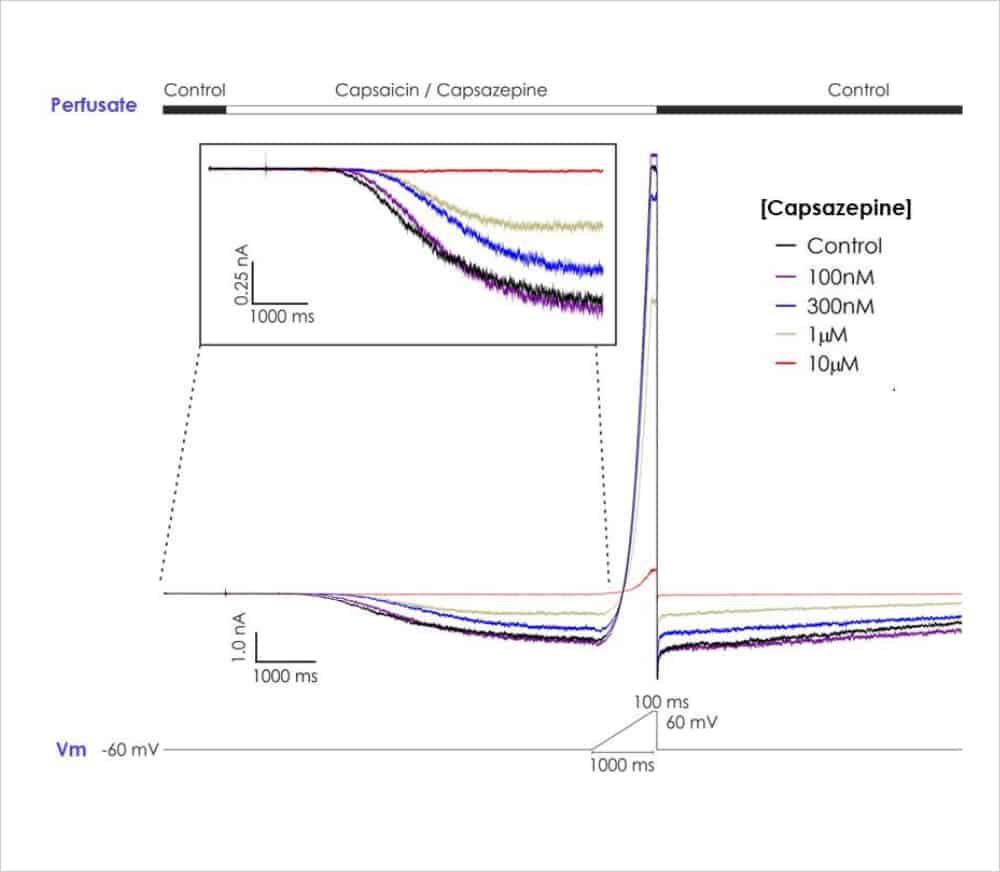representative TRPV1 current traces copy