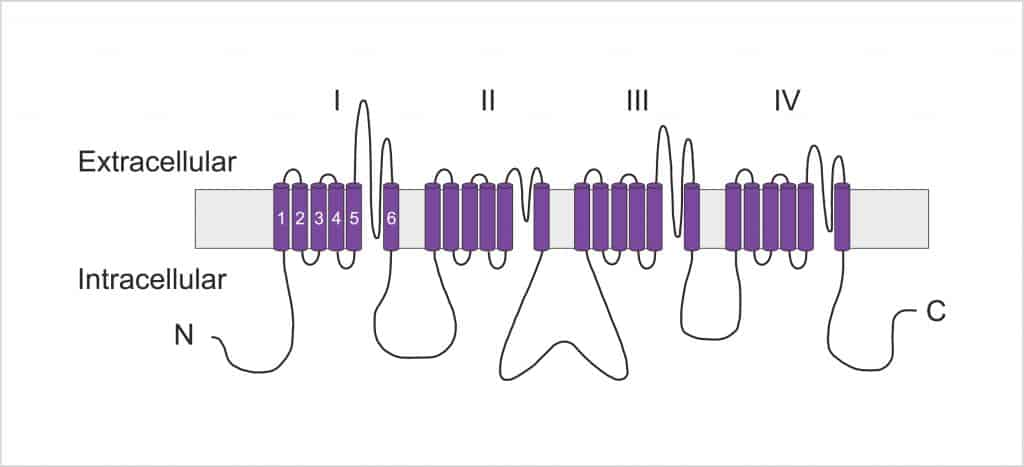 voltage gated sodium channel alpha subunit