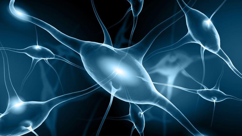 Metrion Biosciences Neuroscience Services 1024x717 1