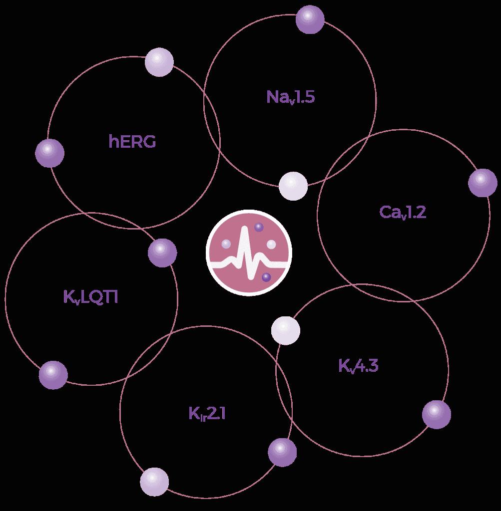 CiPA Approach Diagram Updated 01